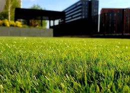 Trawnik po zimie - 6 czynności, które musisz wykonać